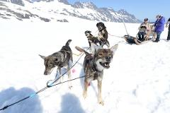 Helicopter & Glacier Dogsled Tour from Knik River Valley