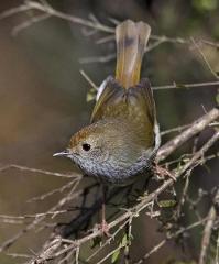 Freycinet Bird Watching Experience