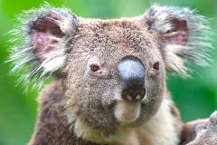 Australia Zoo Tour from Brisbane
