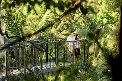 O'Reilly's Rainforest Retreat and Lamington National Park Tour from Brisbane