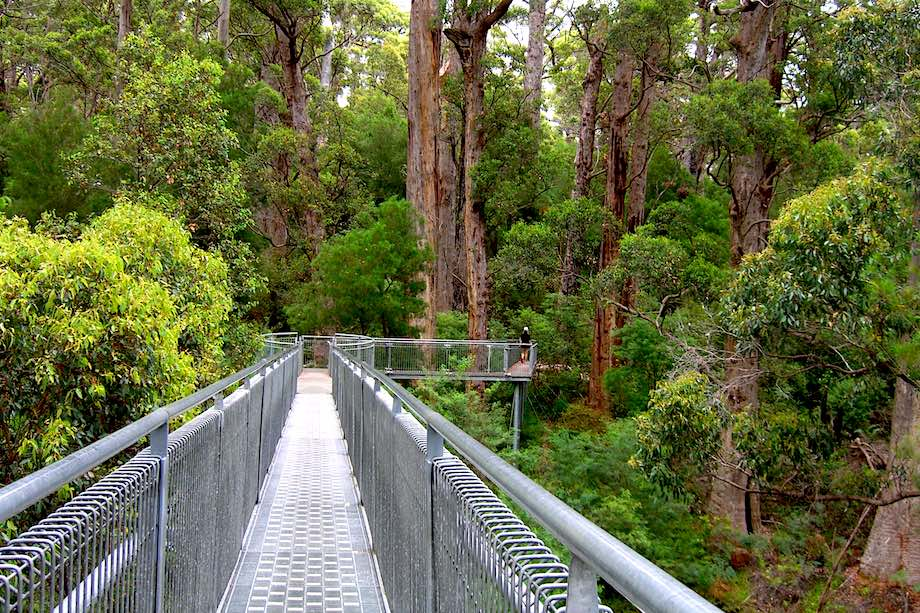 Valley of the Giants Tour from Perth with Tree Top Walk and Lunch