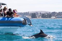 Victor Harbor and McLaren Vale Tour from Adelaide with Wildlife Spotting Cruise