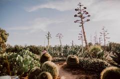 Cactus Country Season Pass