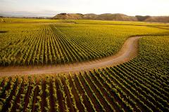 Hawke's Bay Premier Wine Private Tour, including wine tastings & cheese board (5 Hours)