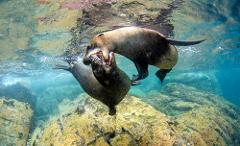 Day Dive Los Islotes
