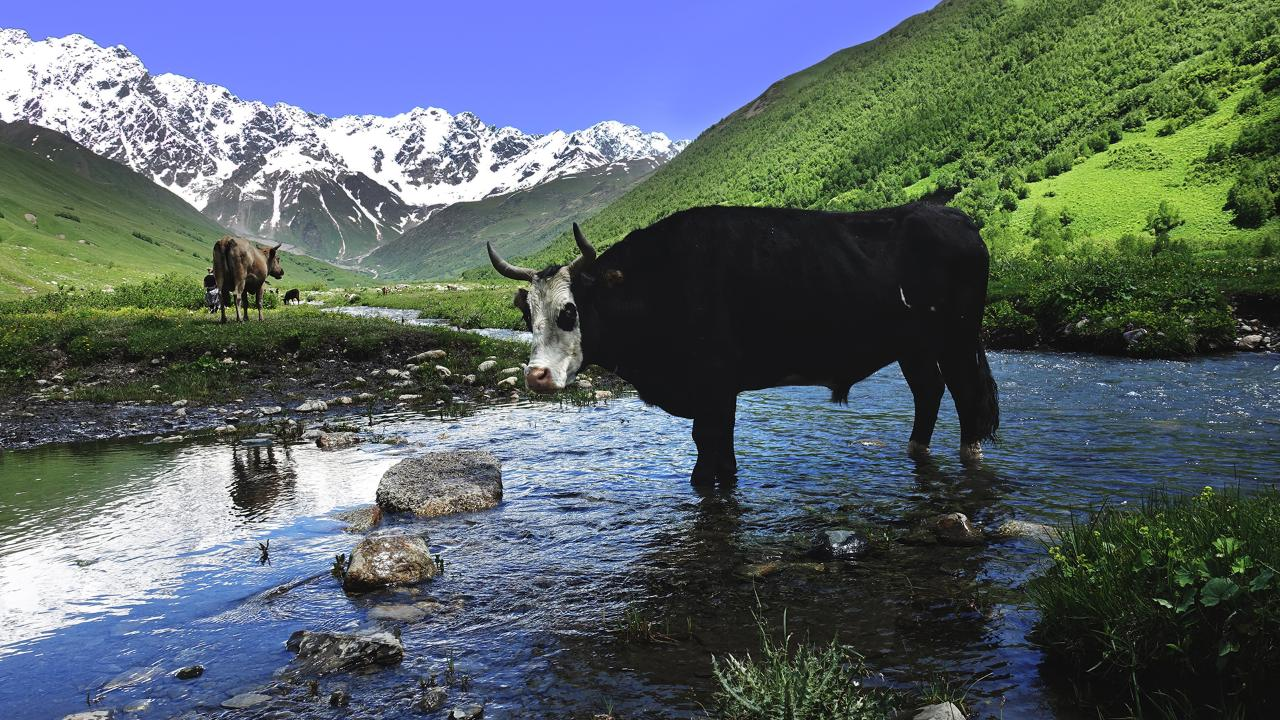Cycle Mongolia - 12 days