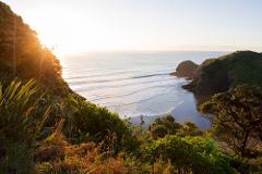 Piha Experience Eco Trip + Surf Combo