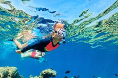 Guided Snorkel Tour - 1:00pm