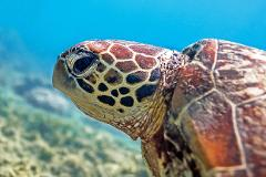 Cairns Turtle Rehab Centre Tour - 13:00 hrs