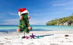 Day Tour & Christmas Lunch - 11am to 5pm