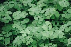 March 17, 2019 St. Patrick's Day