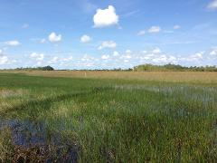 3 hour Private Airboat Tour