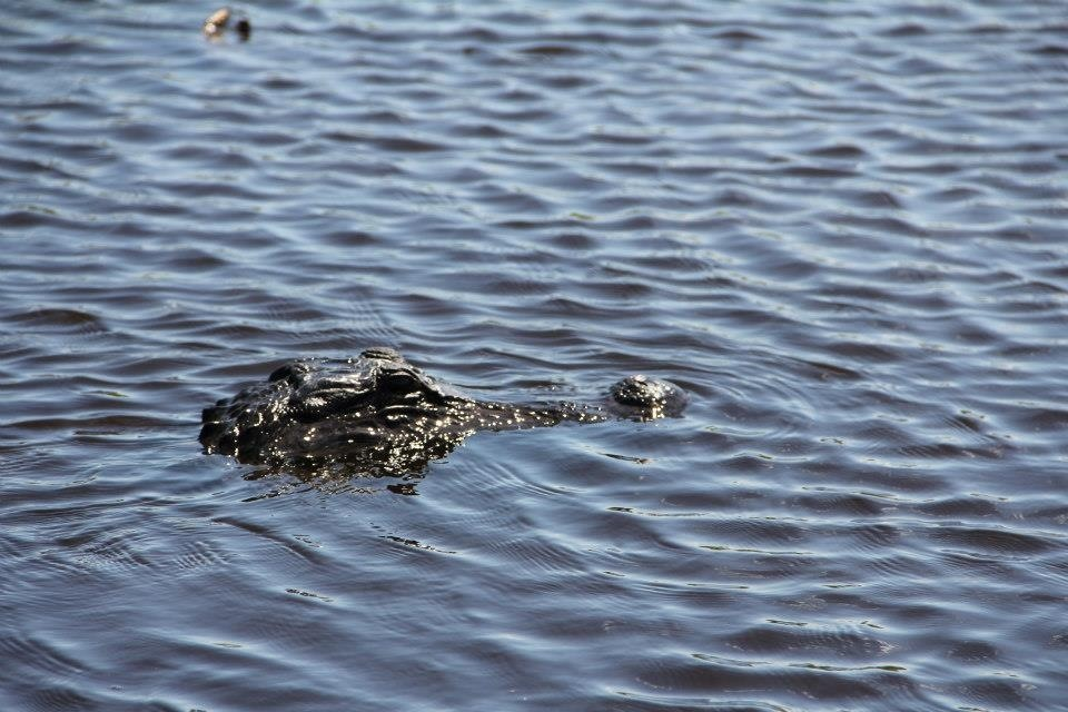 Two hour private airboat tour