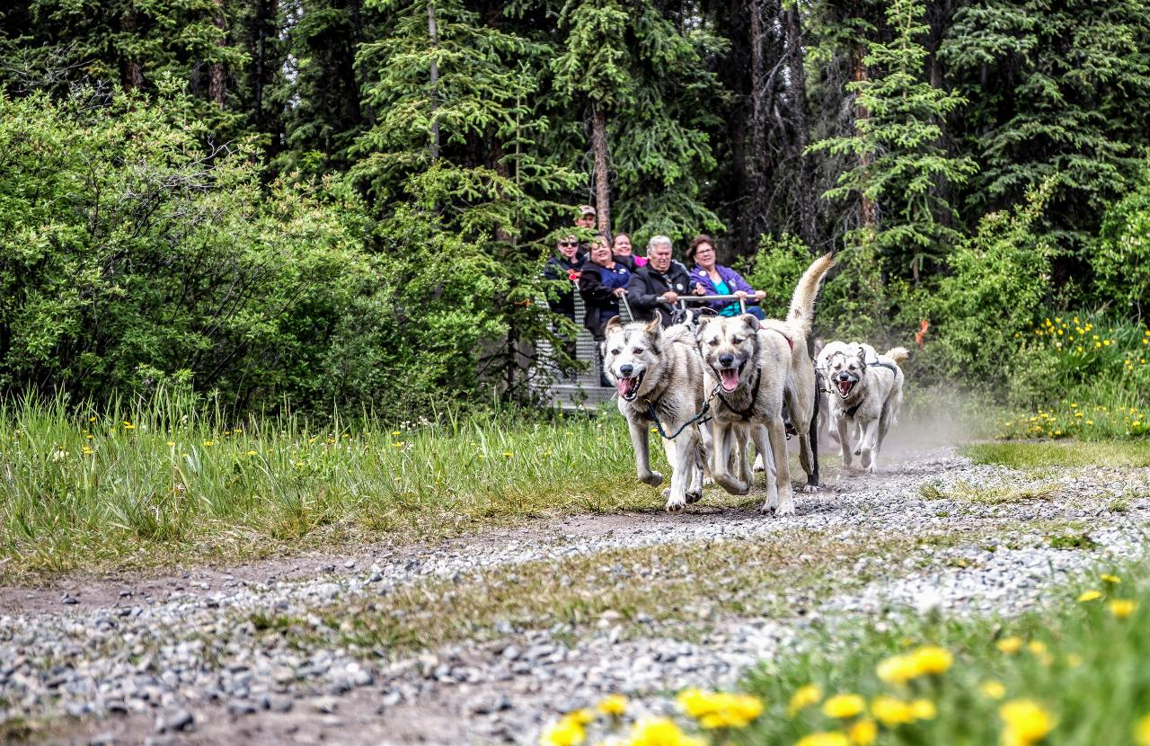 Yukon Discovery and Sled Dog -6.5 HR
