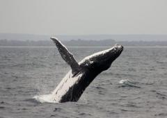 Whales and Wine Tour