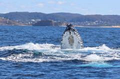 Whale Watching Terrigal Midweek