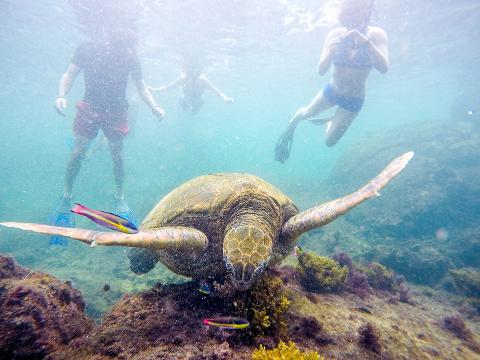 Galapagos_Los_Tuneles_59_of_71_June_15