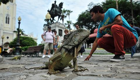 Guayaquil_parque_seminario_2