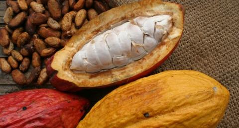 cacao_guayaquil