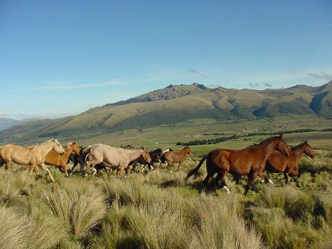 cotopaxi_horse_riding_andes_and_amazon_ecuador_tour_2