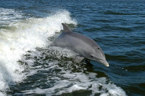 guayaquil_dolphin_2