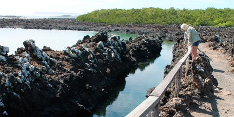 Tour to Tintoreras Bay from Isabela Island