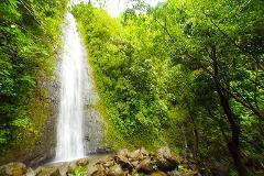 Waikiki to Manoa Falls Hike Shuttle