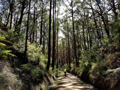 Five Gippsland Rail Trails 10D 9N