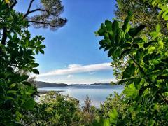 KIWI+FOREST+BEACH – ECO ISLAND TOUR (Cruise ships & short stays)