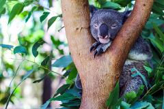 Koala Park Tour / Currently Closed due to COVID 19