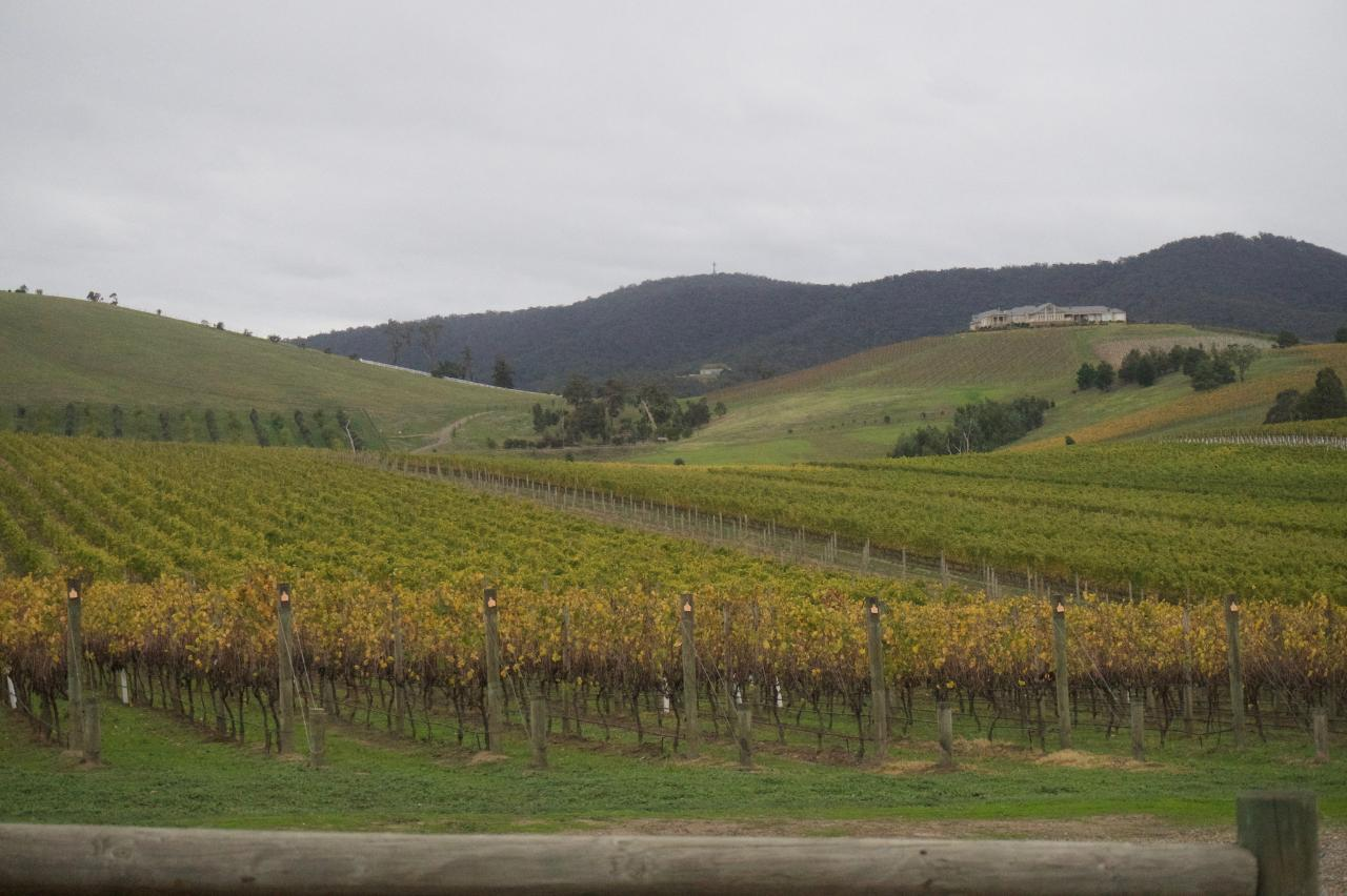 A mixed bunch - Yarra Valley - COMING SUMMER 2020