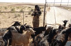9 Tage Nord Oman Rundreise