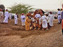 Wonderful Oman in 3 days - Muscat - Wahiba Sands - Turtle Beach.