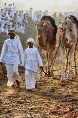 Kamel Rennen im Oman