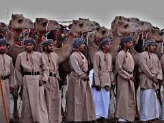camel race in Oman