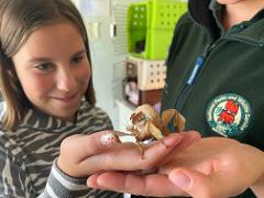 Cleland Wildlife Park - 'JUNIOR CONSERVATION CLUB' - Monthly Sessions