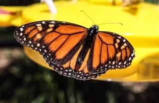 Cleland Wildlife Park - Butterfly Experience