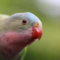Cleland Wildlife Park - Breakfast with the Birds