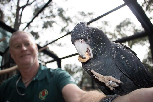 Cockatoo Experience