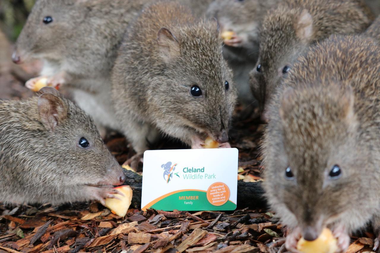 Cleland Wildlife Park - Membership