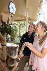 Cleland Wildlife Park - Private Koala Feeding Tour