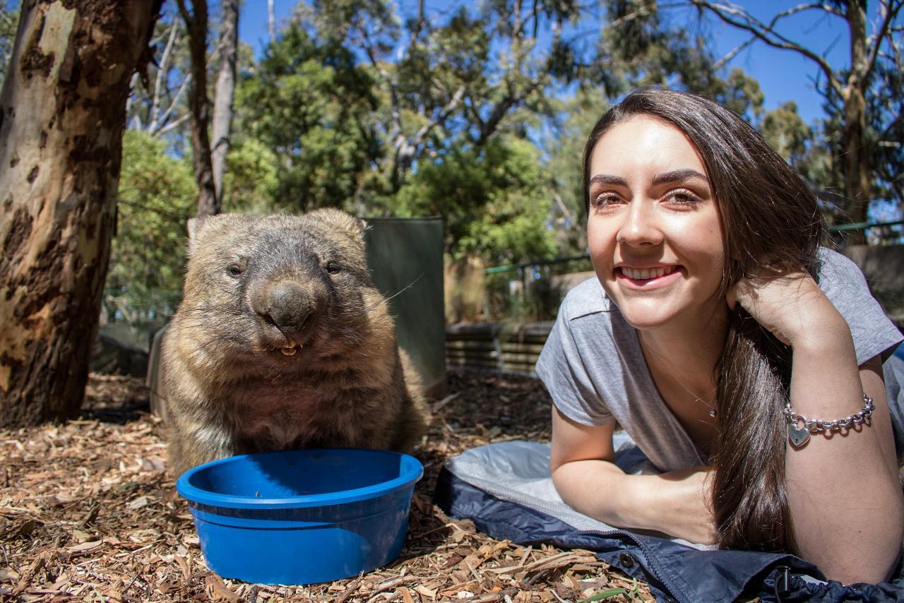 Cleland Wildlife Park - Wombat Encounter