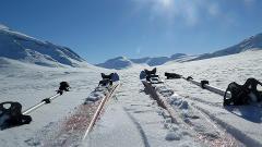Laponia ski tour