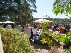 SOUTHBOUND ESCAPES - Small Group Tour -  3 Hour - Tilba Valley Winery Tour including transport, lunch & wine
