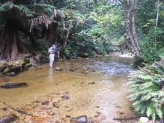 5 Day Fly Fishing Tour - Local Waters