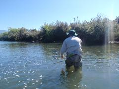 Fly Fishing Tour - Half Day(s)
