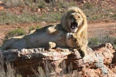 Safari full day tour