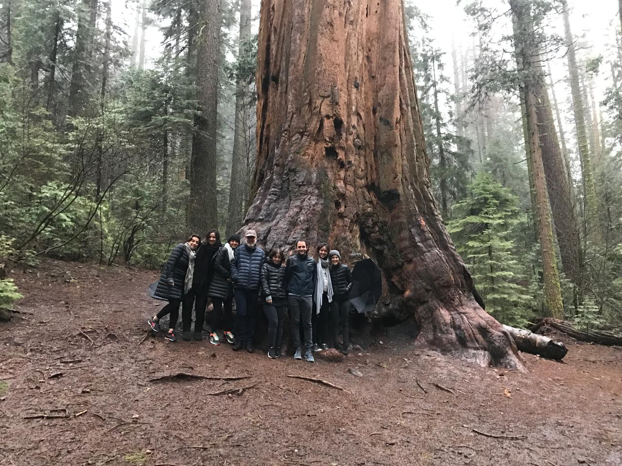Private Giant Sequoia Combo Jeep Tour