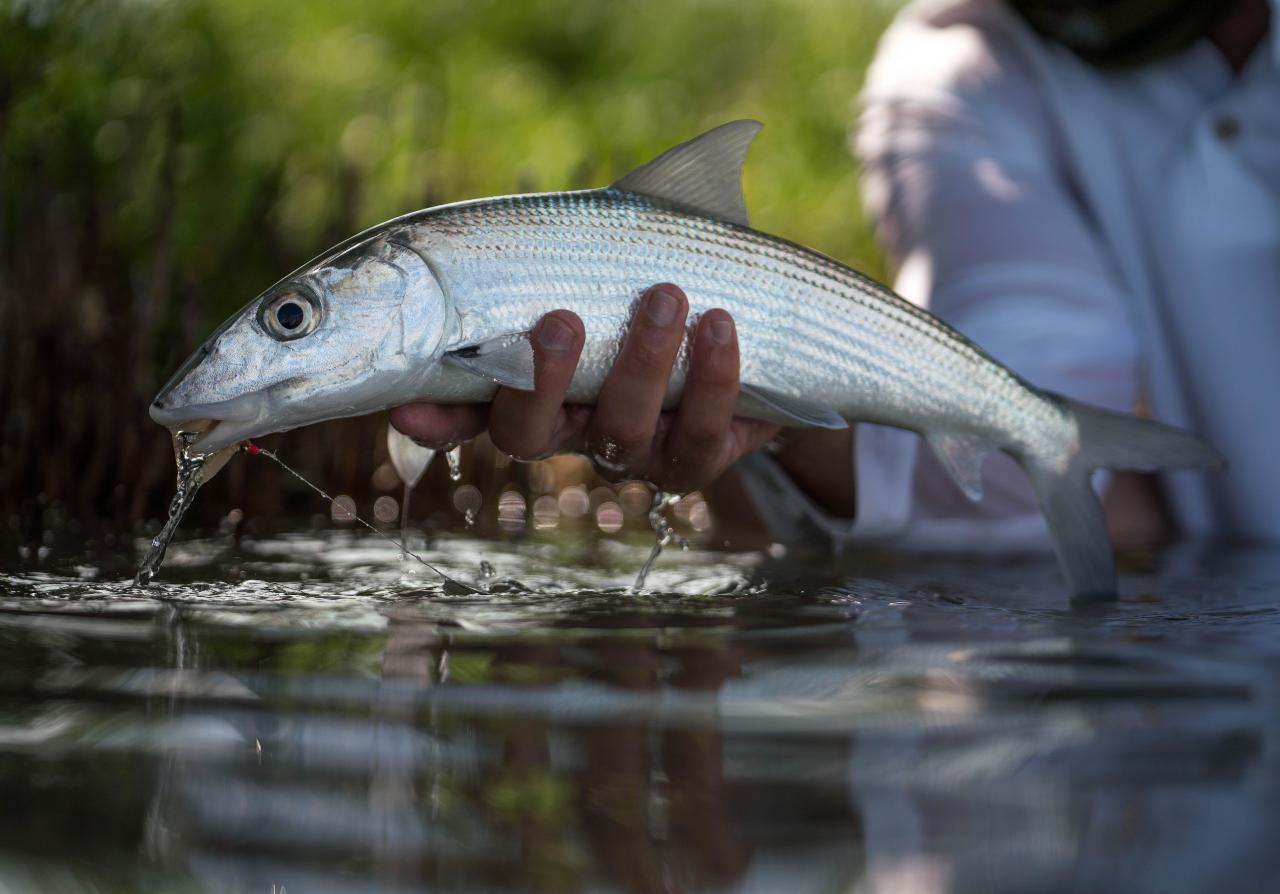 Flats Fishing - Bone Fish Only - Half Day