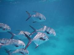 Snorkeling-Half Day
